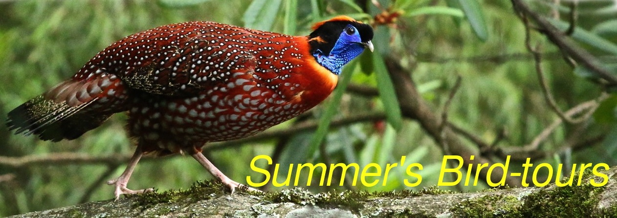 China Summer's bird tours