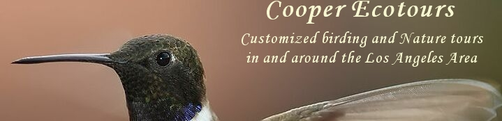 Cooper Ecotours, customized birding and nature tours in and around the Los Angeles Area